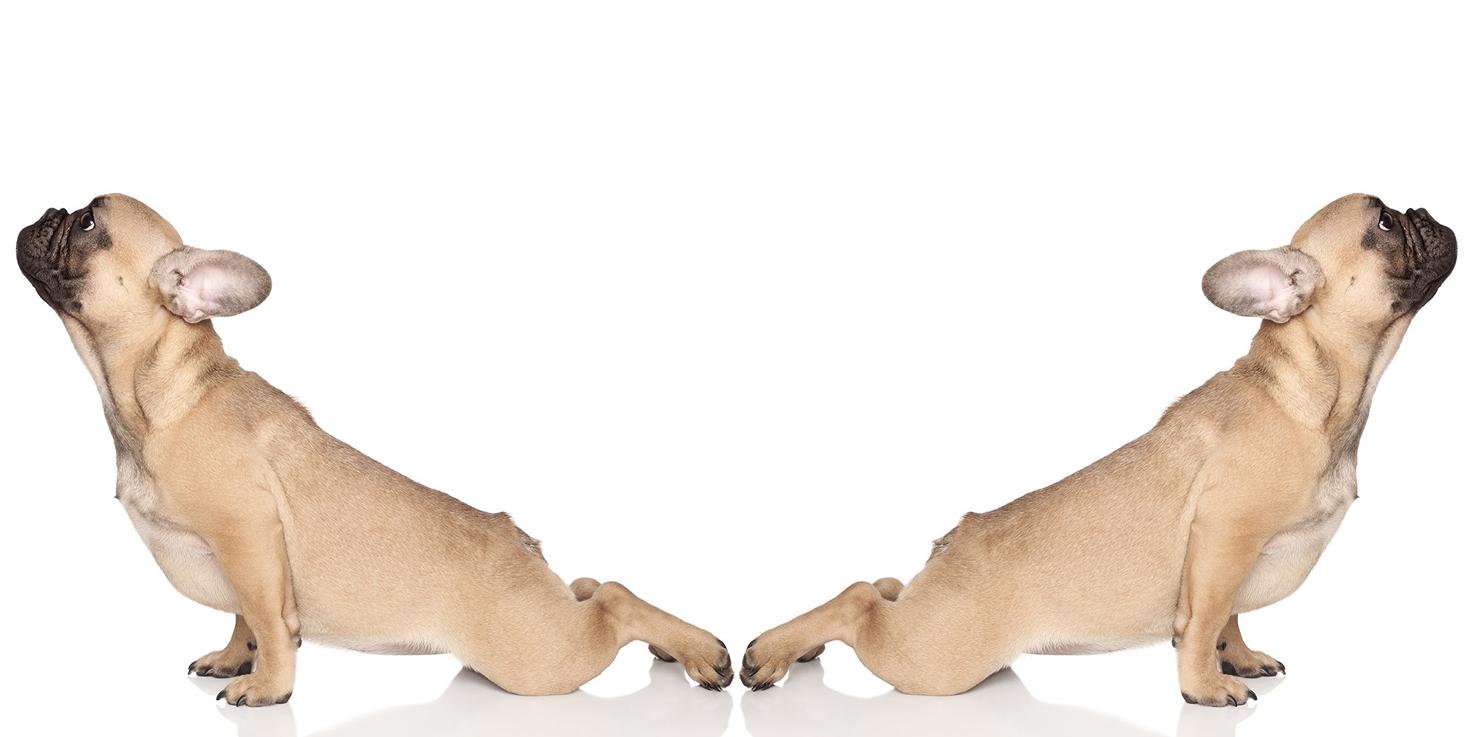 Web-banner-slide-1-doggie-yoga-back
